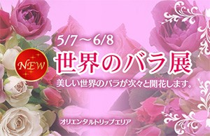 世界のバラ展_サムネイル