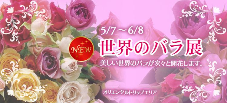 世界のバラ展バナー